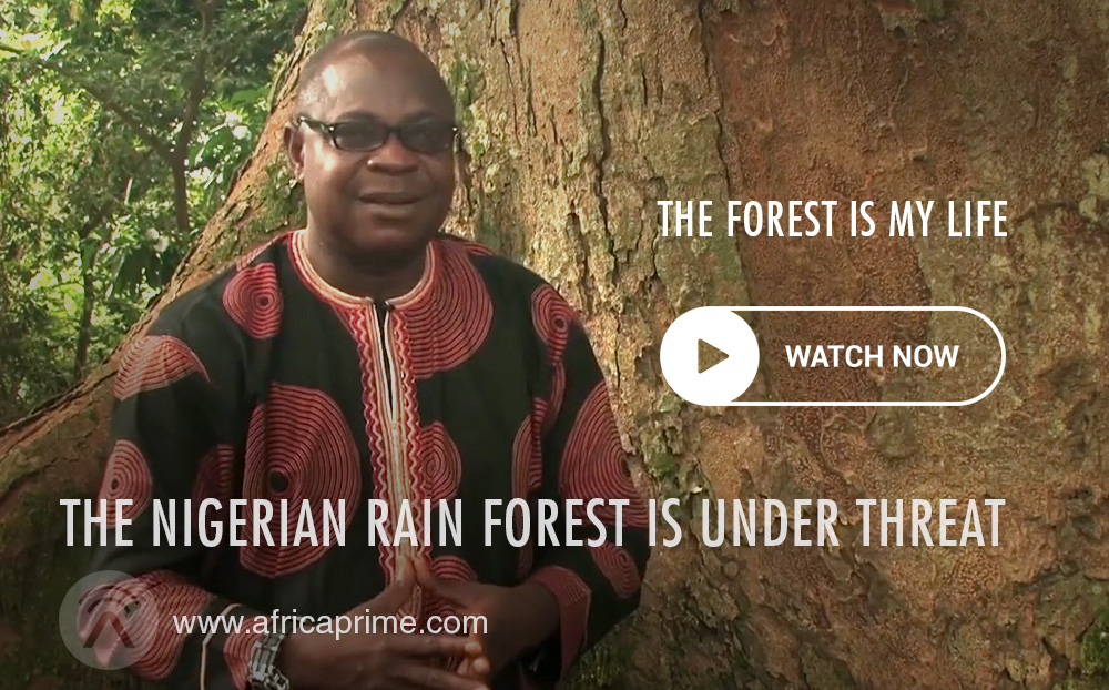 Nigeria Rain Forest