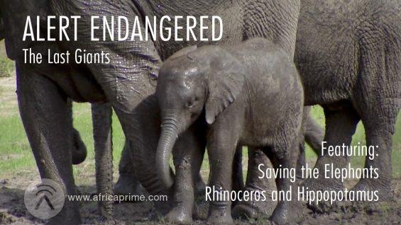 Alert Endangered – Last Giants