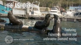 Life Ashore – South Africa