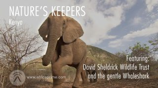 Nature's Keepers Kenya