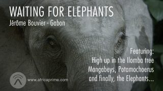 Waiting for the Elephants