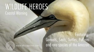 Wild Life Heroes Coastal Warning