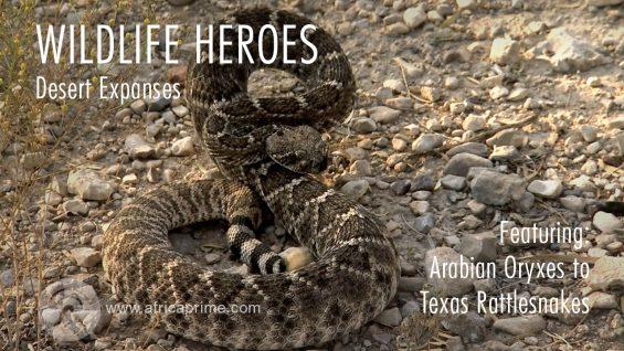 Wild Life Heroes Desert Expanses