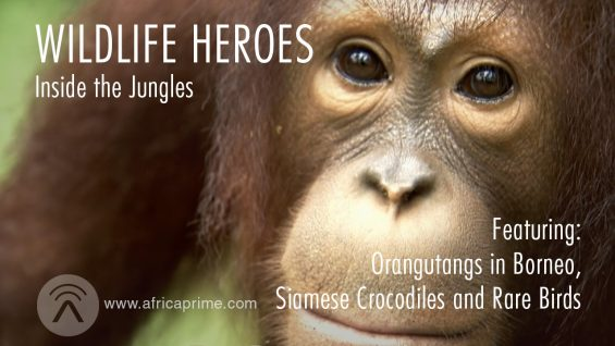 Wildlife Heroes Inside the Jungles