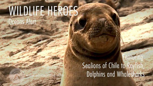 Wild Life Heroes Oceans Alert