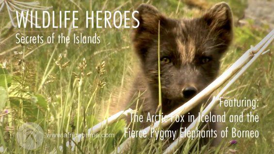 Wild Life Heroes Secret of the Islands