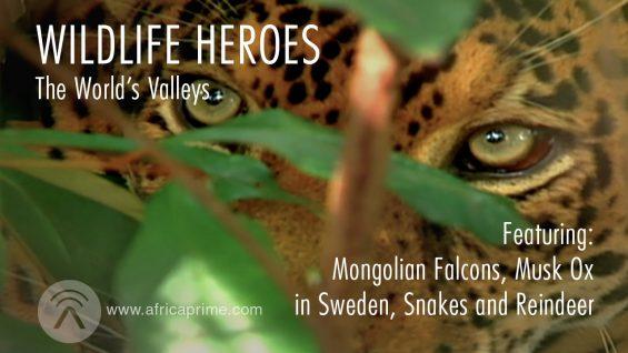 Wild Life Heroes World's Valleys