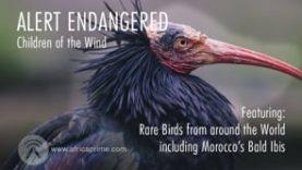 Alert Endangered – Children of the Wind
