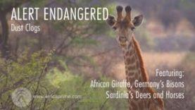 Alert Endangered – Dust Clog