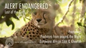 Alert Endangered – Last of the Lords