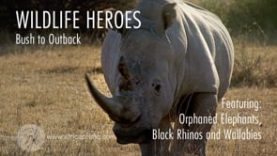 Wildlife Heroes Bush to Outback