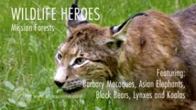 Wildlife Heroes Mission Forests