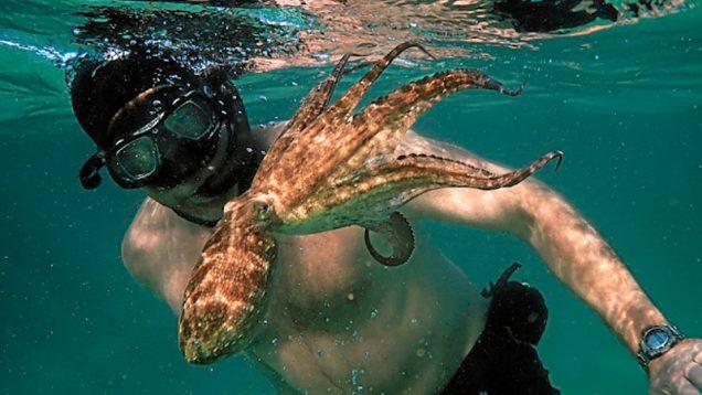 Africa Prime Octopus