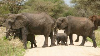 Kenya launches elephant naming festival to boost wildlife conservation