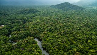 9-JulyGabon is first African country paid to protect its rainforest