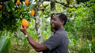 Liberia courts premium markets to boost cocoa earnings